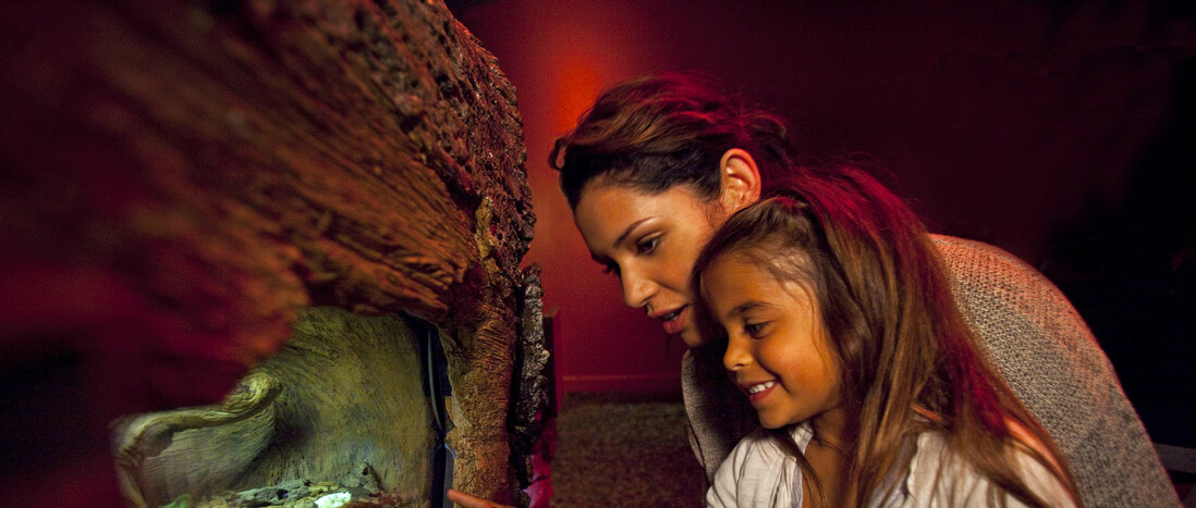 Mother and daughter observing exhibit inside the Rot Room